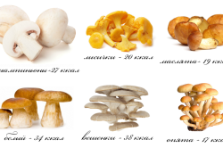 Калорийность грибов
