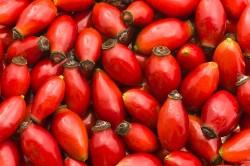 Плоды шиповника для приготовления сбора
