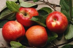 Яблоки для салата из сельдерея