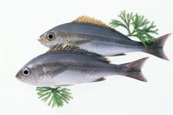 Рыба при диете для зачатия