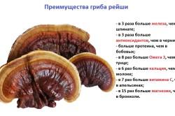 Преимущества гриба рейши