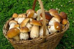 Противопоказания к грибам при рвоте