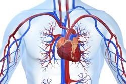 Сердечные заболевания - противопоказание для приема контрастного душа