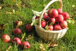 Яблоки при калиевой диете
